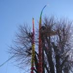 niedziela palmowa i konkurs palm wielkanocnych w lipnicy murowanej (134)